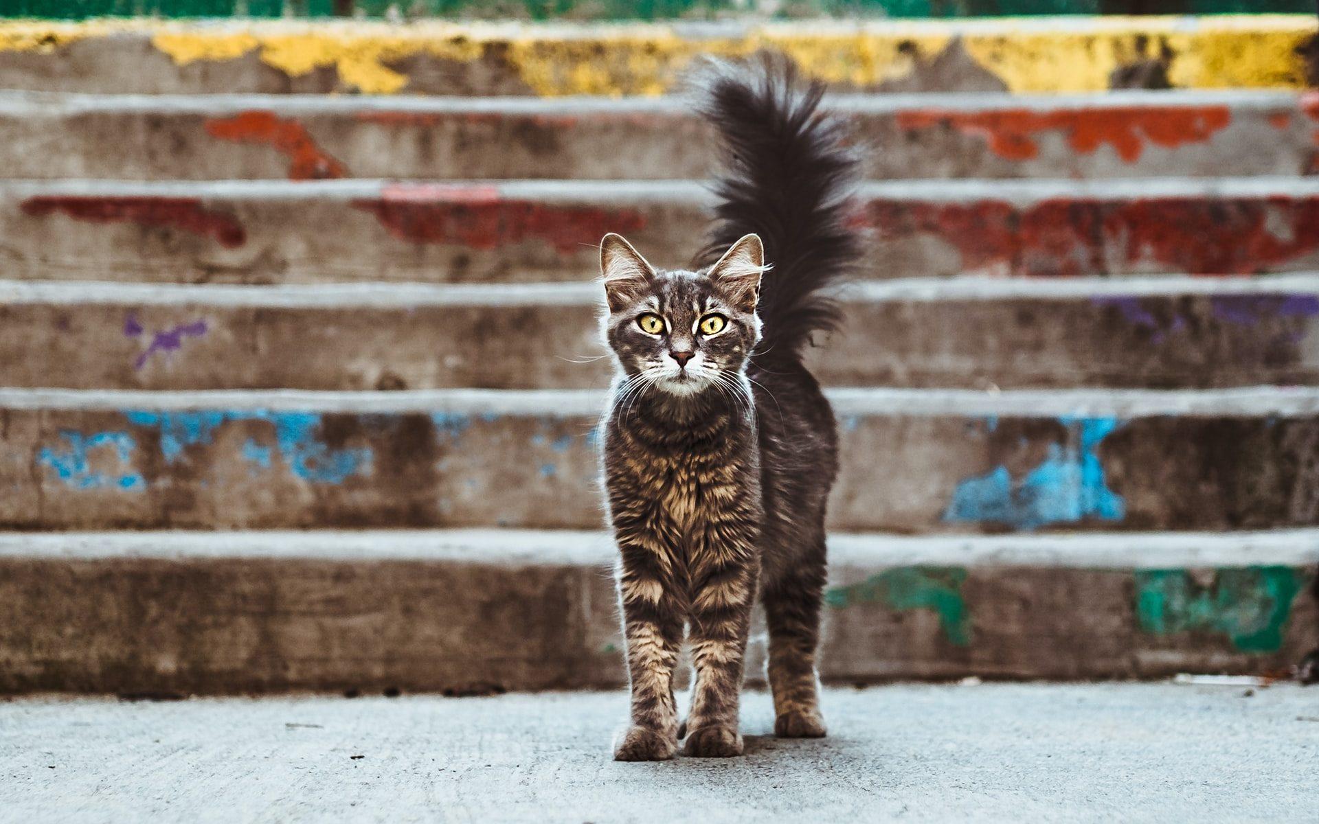 was lesbische Frauen von katzen lernen können