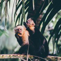 Queeres Treiben im Dschungelcamp